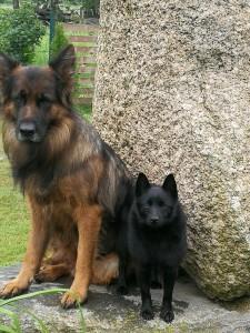Lehmburg suņi